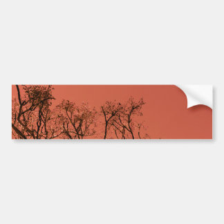 Tree with red sky bumper sticker
