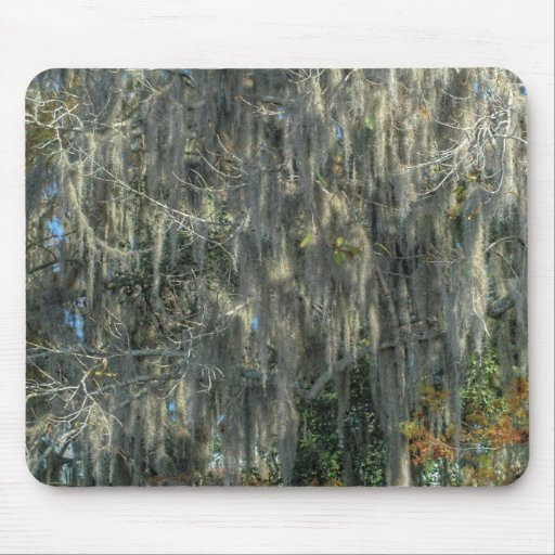 Tree With Spanish Moss Mouse Pad