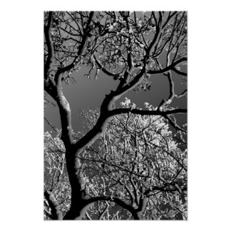 Tree with Sun and Snow 1 BW Poster