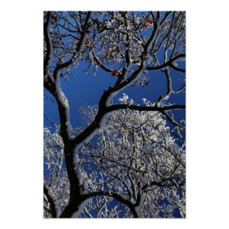 Tree with Sun and Snow 1 Poster