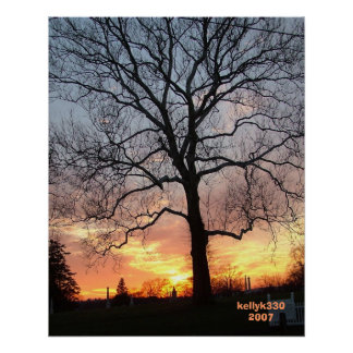 tree with sunset poster