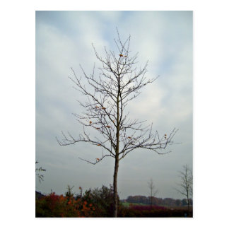 Tree without leaves against the blue sky postcard
