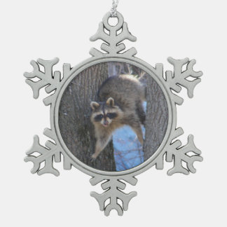 Treed Coon ~ Pewter ornament