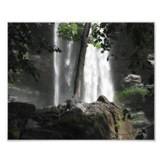Treefalls Photo Print