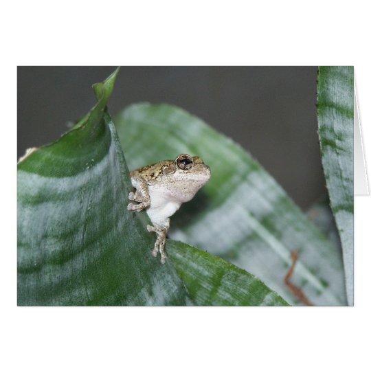Treefrog Card