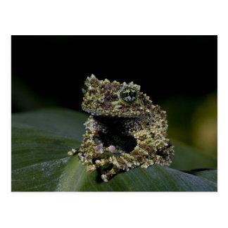 Treefrog cubierto de musgo, corticale de postal