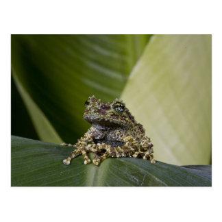 Treefrog cubierto de musgo, corticale de postales