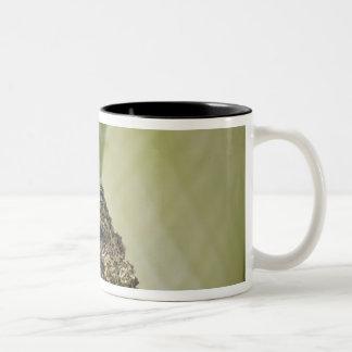 Treefrog cubierto de musgo, corticale de taza de dos tonos