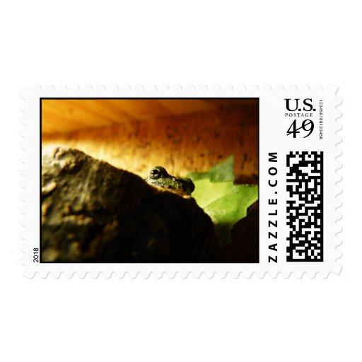 Treefrog Postage Stamps 1