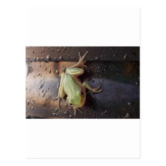 Treefrog Postcard