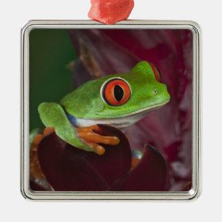 treefrog Rojo-observado Ornamento De Navidad