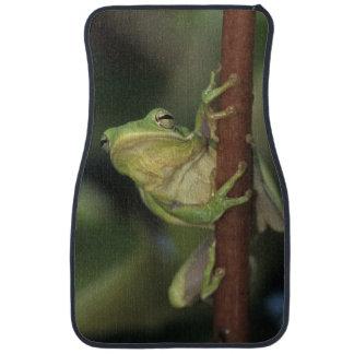 Treefrog verde, Hyla cinerea, adulto en amarillo Alfombrilla De Auto