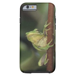 Treefrog verde, Hyla cinerea, adulto en amarillo Funda Para iPhone 6 Tough