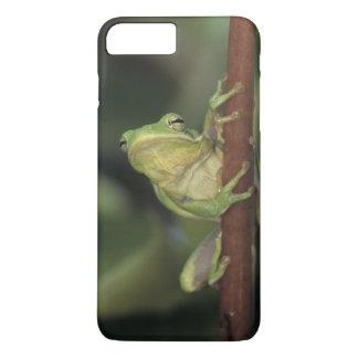 Treefrog verde, Hyla cinerea, adulto en amarillo Funda iPhone 7 Plus