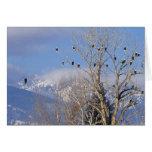 Treeful de águilas calvas acerca a Hamilton Montan Felicitaciones