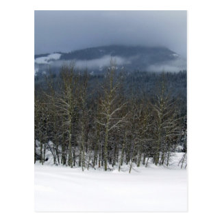 treegrove postcard