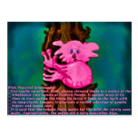 Treehugger pacífico rosado tarjetas postales