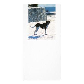 treeing walker coonhound on beach.png card