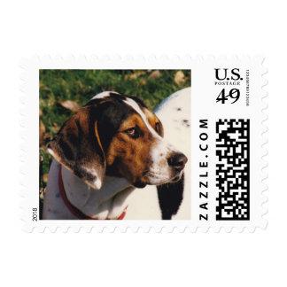 Treeing Walker Coonhound Postage
