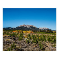 Treeline Mountain Top // Rustic Forest Colors