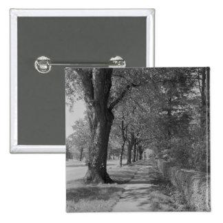 Treelined street with sidewalk button