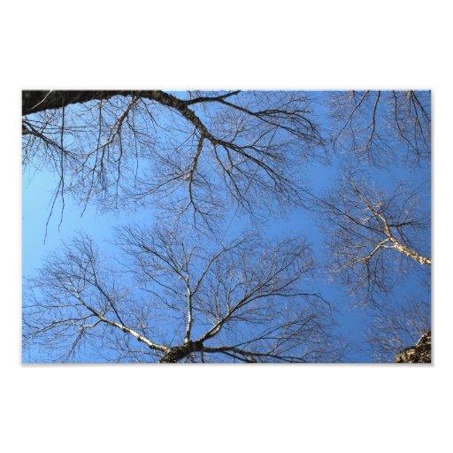 Trees 1 photo print