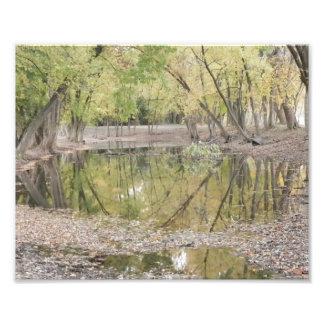 Trees ~ 1 photo print