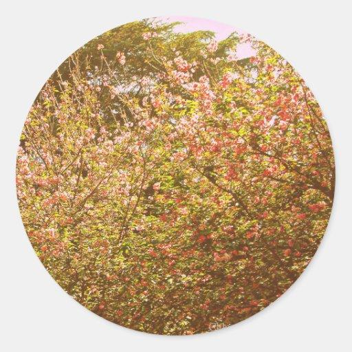 Trees #4 classic round sticker