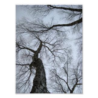 Trees 4 photograph