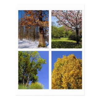 Trees according to the seasons postcard