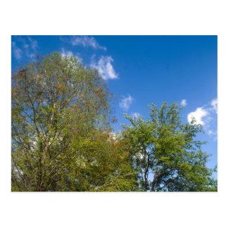 Trees against blue sky postcard