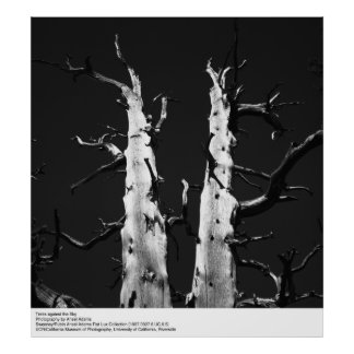 Trees against the Sky by Ansel Adams Poster