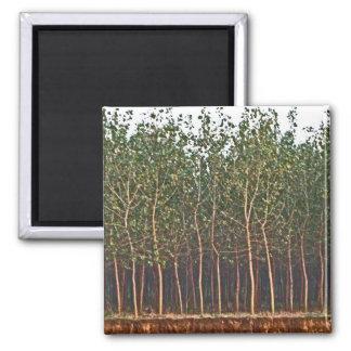 Trees Along River Magnet