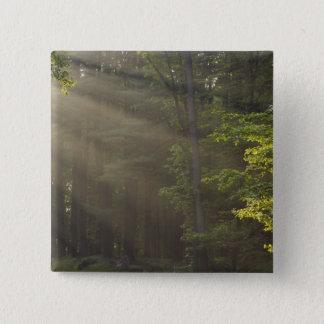 Trees alongside 7 Lakes Drive, Harriman, NY Button