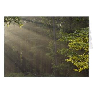 Trees alongside 7 Lakes Drive, Harriman, NY Card