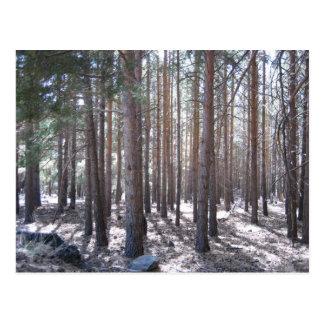 Trees Alpujarra Valley Andalusia Spain Postcard