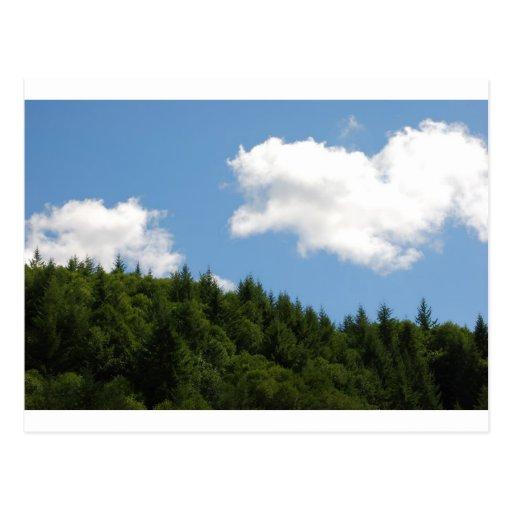 Trees and blue sky postcard