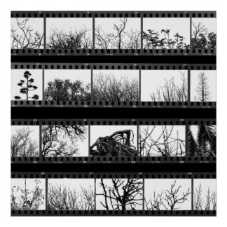 trees and plants film proof sheet poster