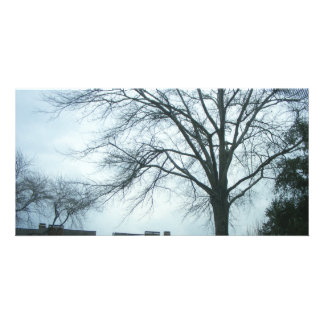 Trees And Sky (PhotoCard) Card