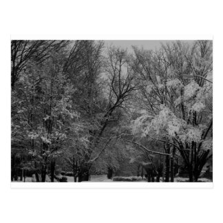 """""""trees and snow"""" by Coressel Productions Post Card"""