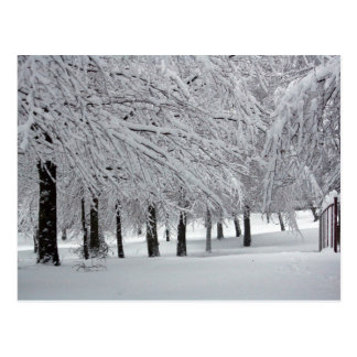 trees and snow postcard