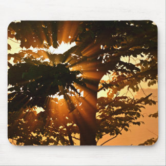 Trees And Sun Rays Mouse Pad