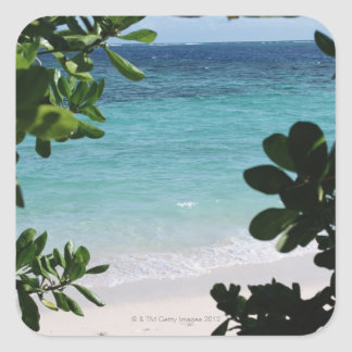 Trees and the sea square sticker