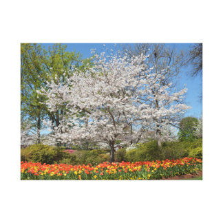 Trees and Tulips Canvas Print