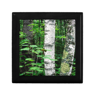 Trees Aspen Trunks Quetico Ontario Canada Gift Box