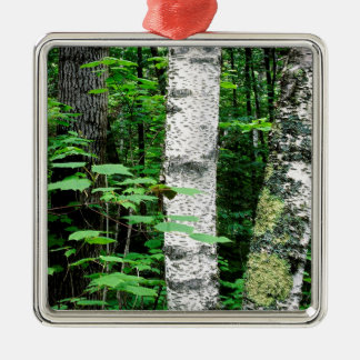 Trees Aspen Trunks Quetico Ontario Canada Metal Ornament