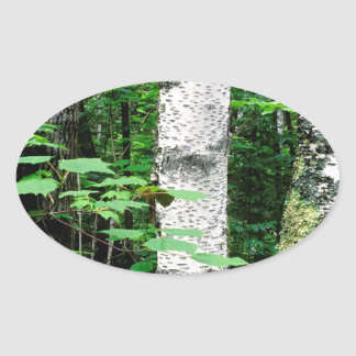 Trees Aspen Trunks Quetico Ontario Canada Oval Sticker