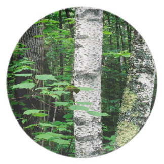 Trees Aspen Trunks Quetico Ontario Canada Dinner Plates