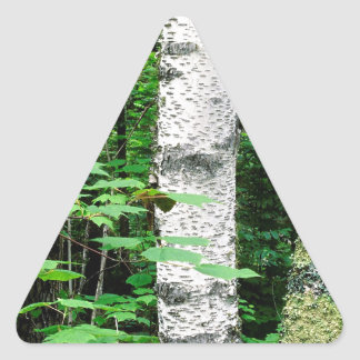 Trees Aspen Trunks Quetico Ontario Canada Triangle Sticker