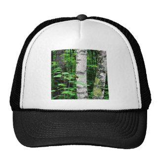 Trees Aspen Trunks Quetico Ontario Canada Trucker Hat